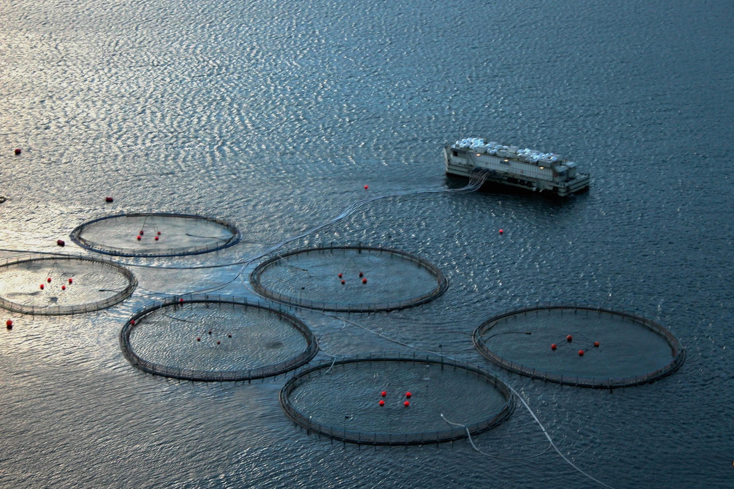 Færøsk havbrug 1