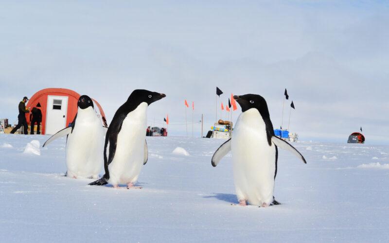 Pingvin besøk Filchner