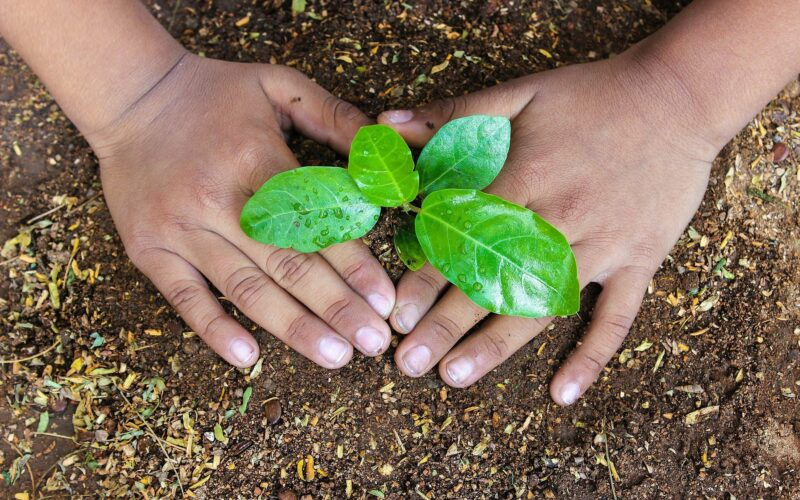 Plant a Sapling for Better Future