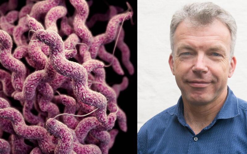 Campylobacter illfoto m wensaas