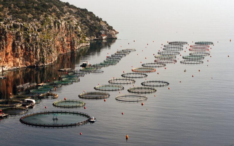 Fiskeanlegg med ringmerd